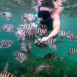 Snorkeling in the Indian Ocean