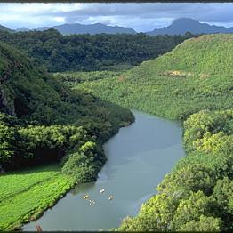 Wailua Kayak Tour