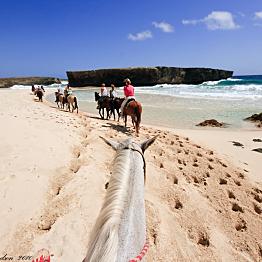 EXPLORE THE BEAUTY OF ARUBA on an ADVENTUROUS HORSEBACK RIDING TOUR