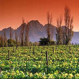 Cape Town Winelands Tour