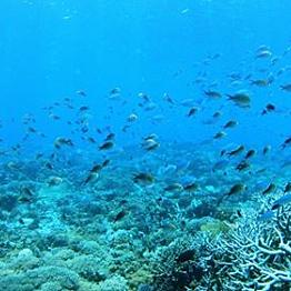 Snorkeling around Fanjove Island