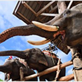 Elephant Experience