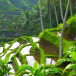 Travel to Ubud