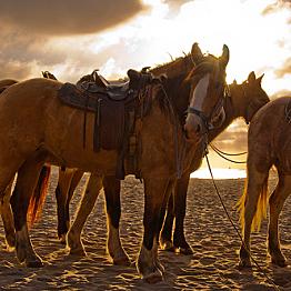 Horseback tours on Maui