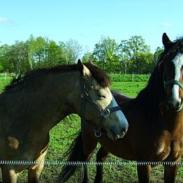 Apartment on Scenic Horse Farm