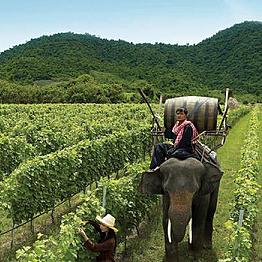 Thai Winery Tour