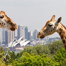 TWO tickets to Taronga Zoo