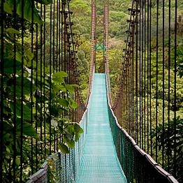A walk in a Costa Rica cloud forest