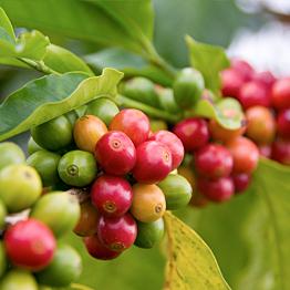 A coffee tour in Costa Rica