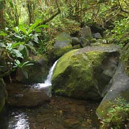 Rain Forest Hike