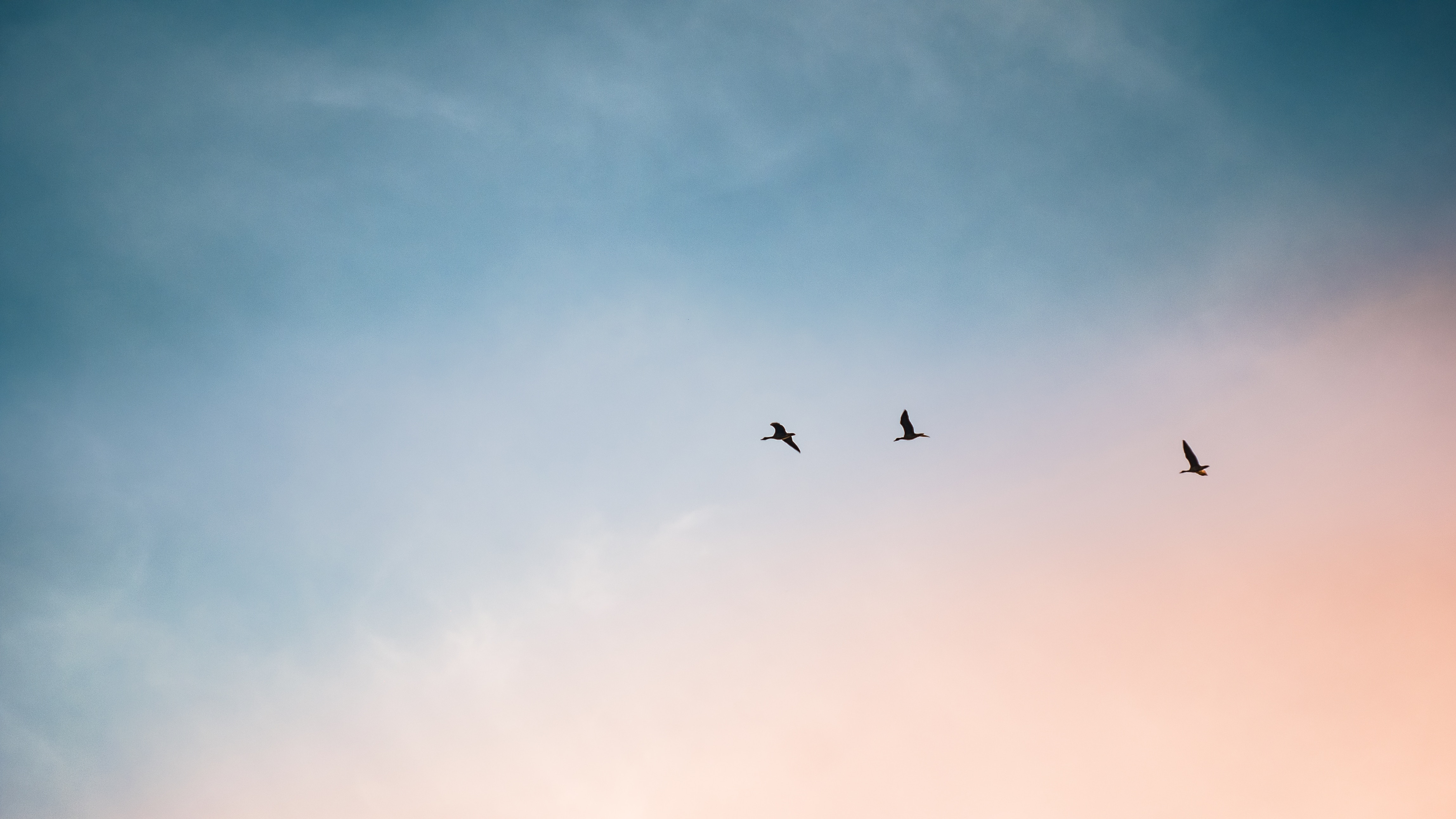 three birds flying in the sky