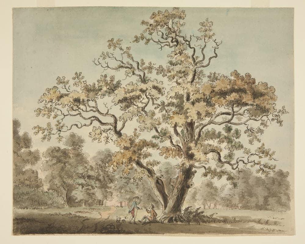 An Oak In Richmond Park Watercolour World