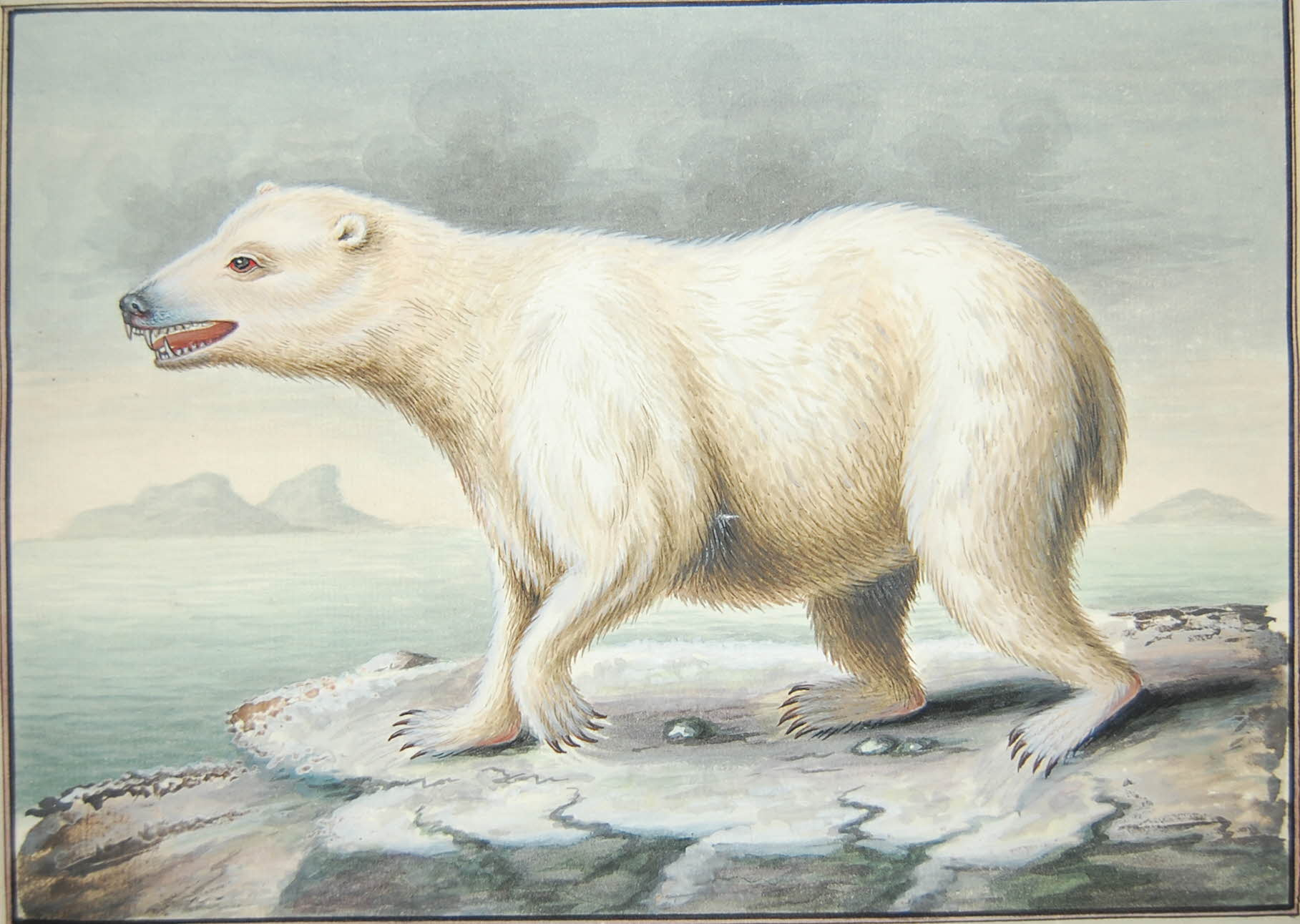 Watercolour painting of a polar bear in profile facing left, with sea and land (icebergs?) behind.