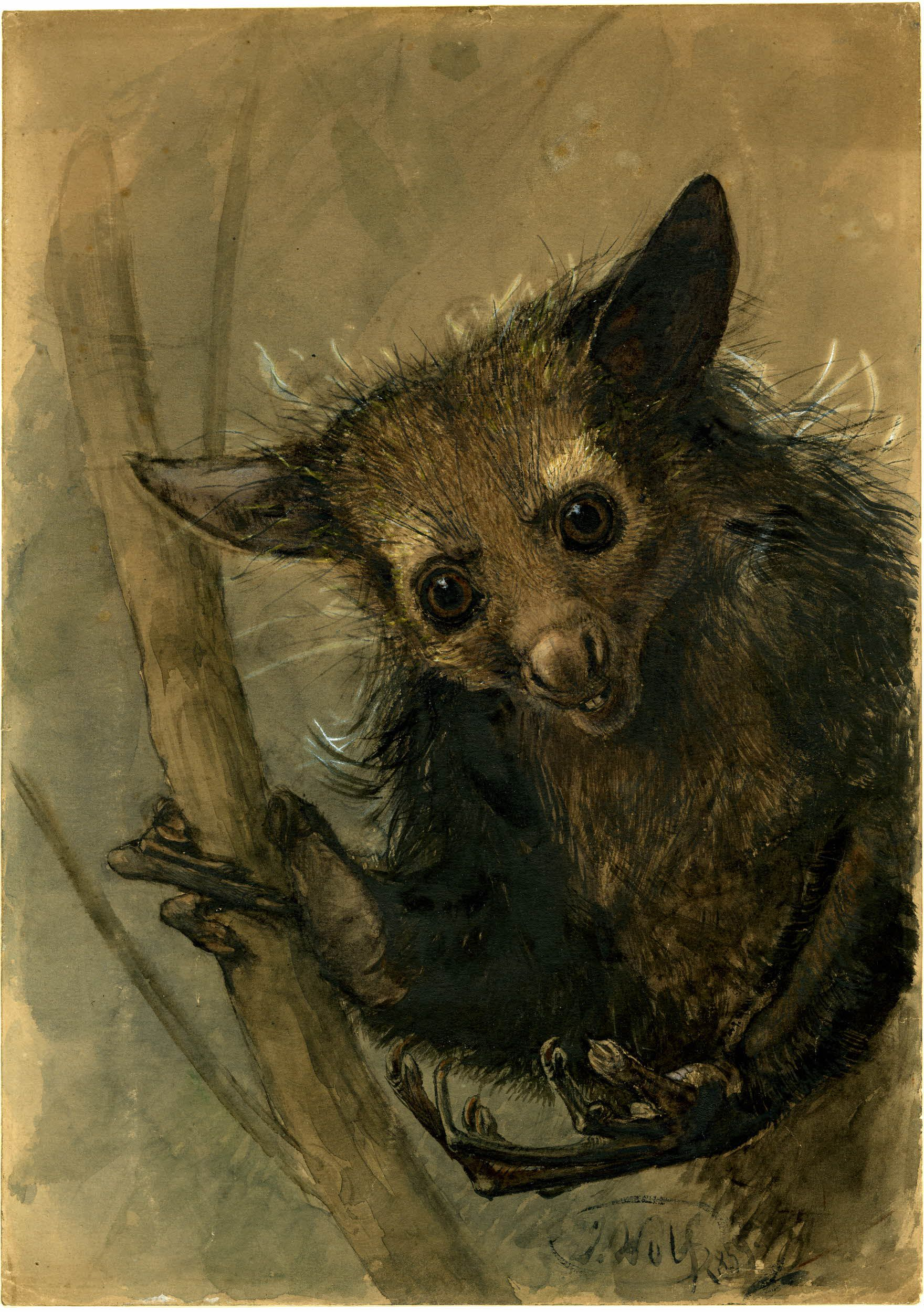 Watercolour painting of an Aye-Aye lemur facing the viewer.