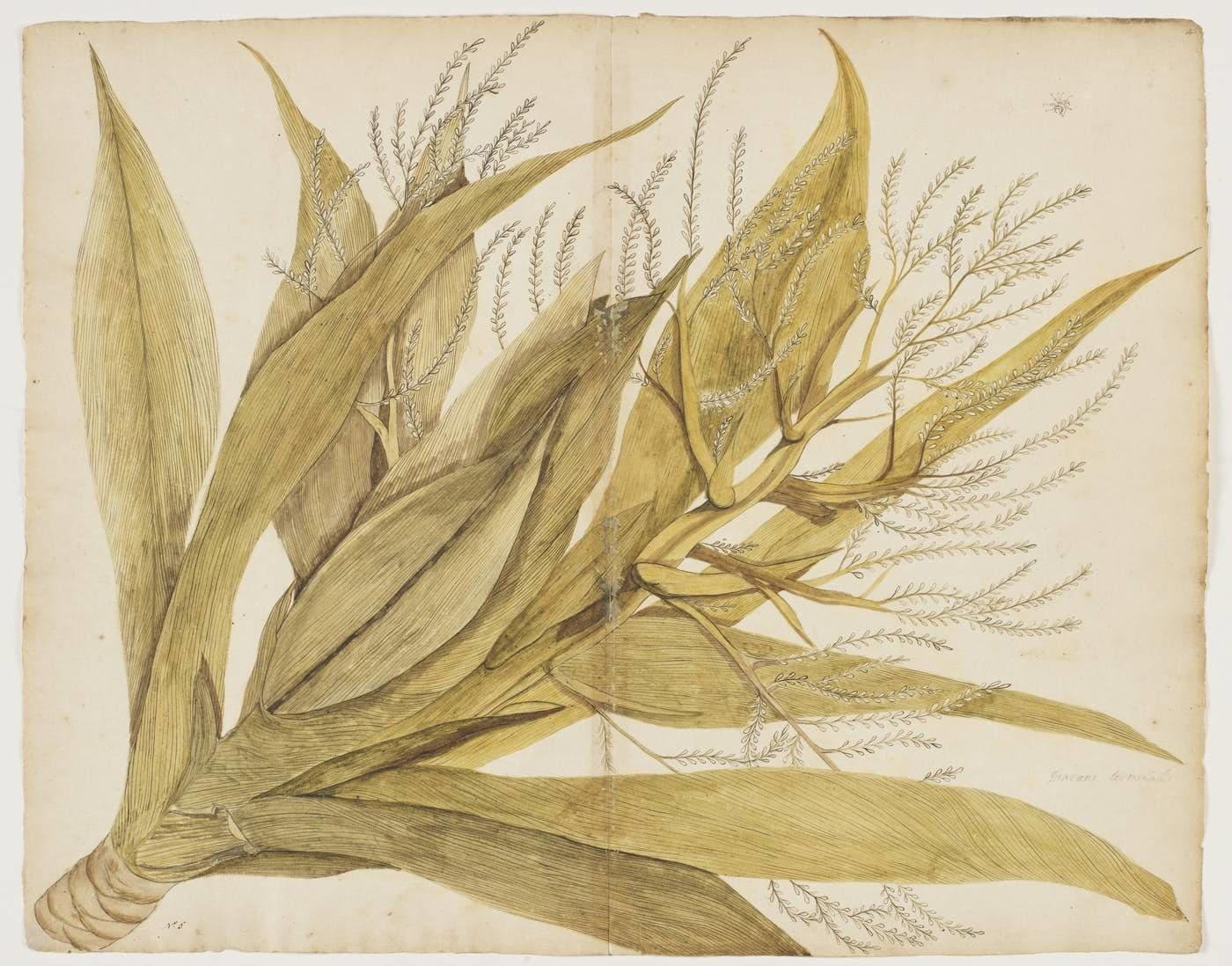 Watercolour painting of a plant