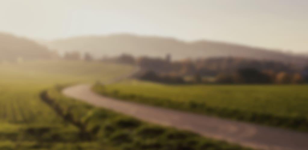 Blurry field landscape