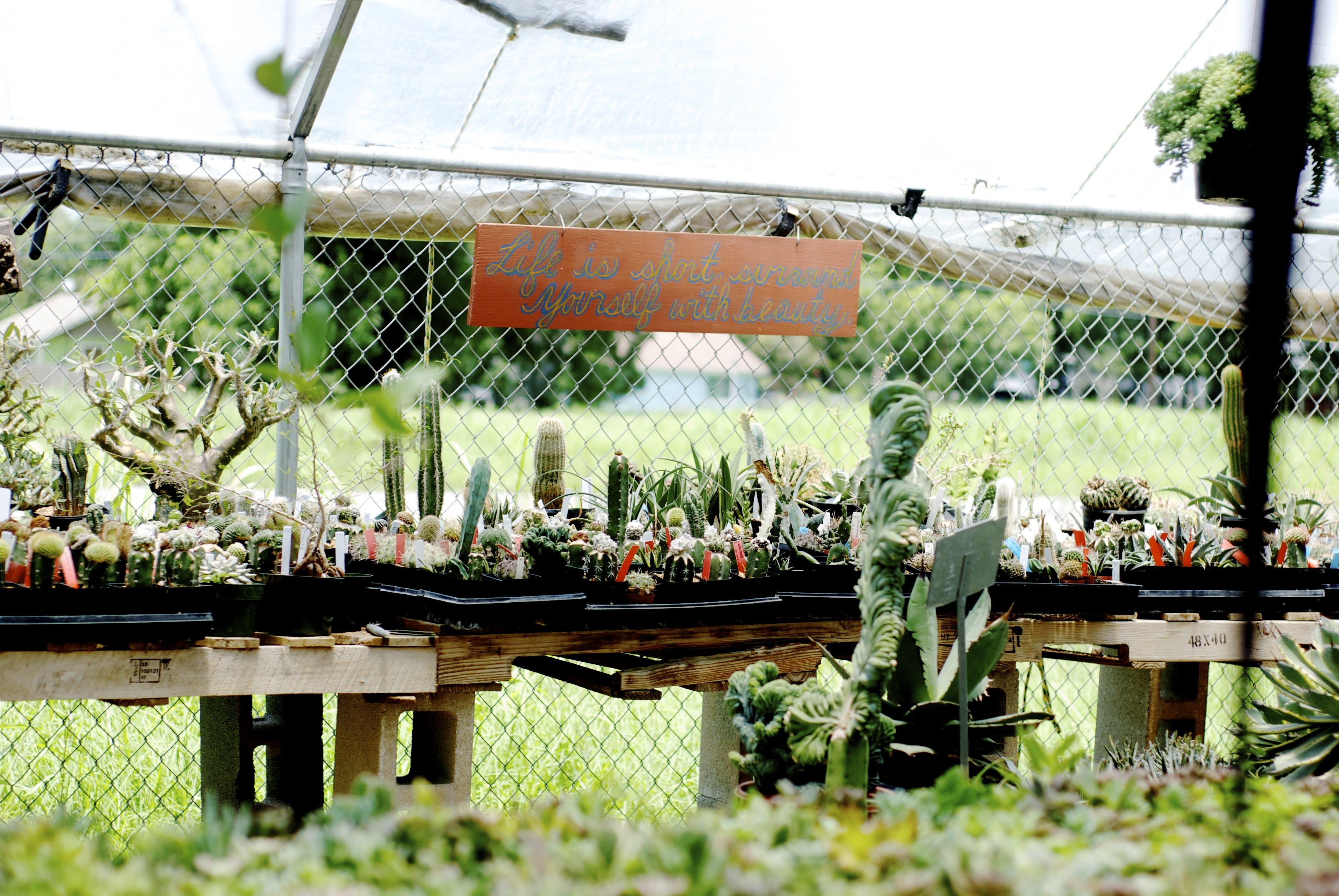 plants_8