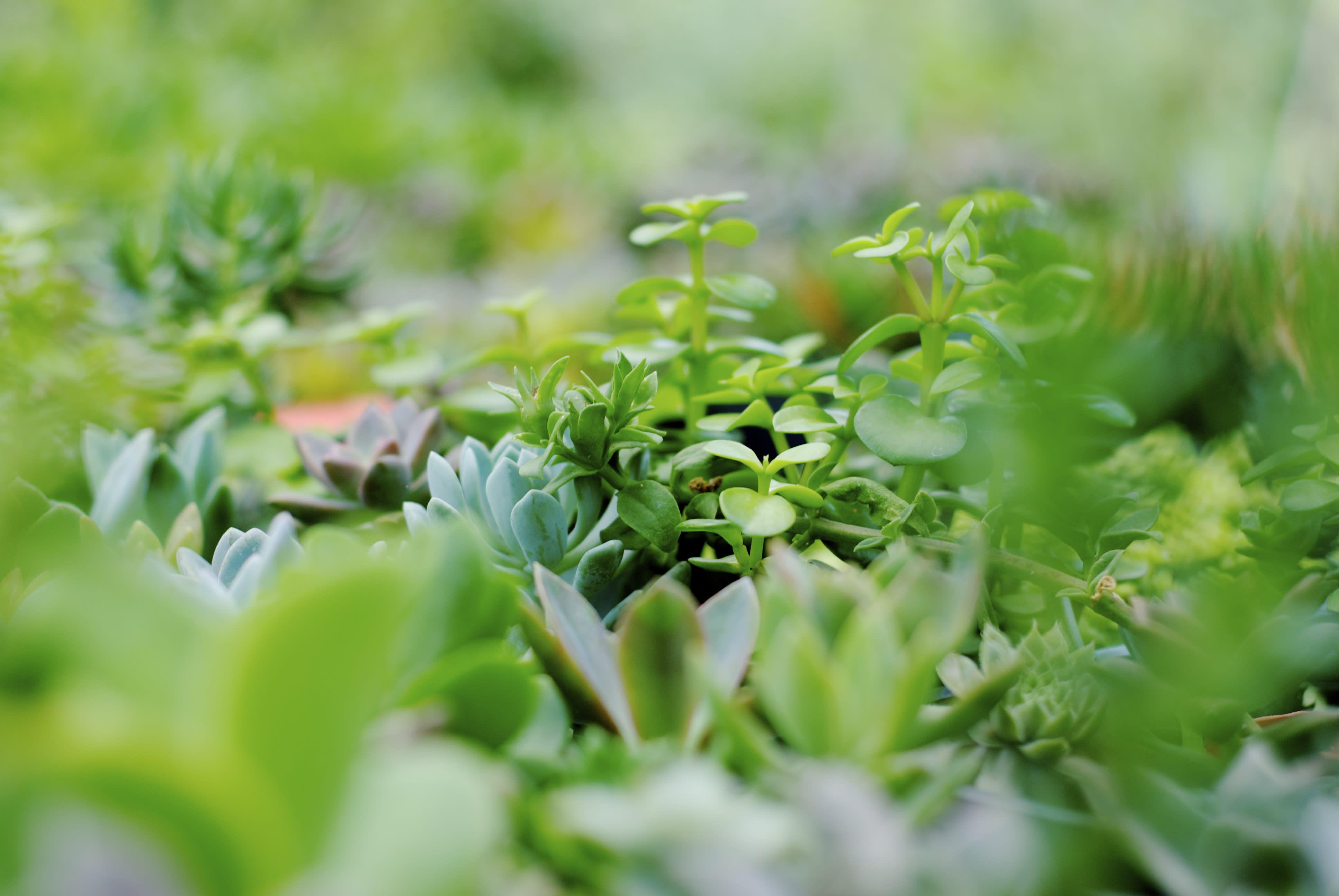 plants_5