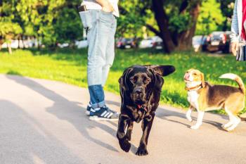 20 populære hunderacer i Danmark. Hvilken hund skal jeg vælge?