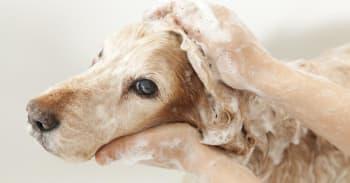 10 Typiske Hundepleje fejl og hvordan at man undgår dem