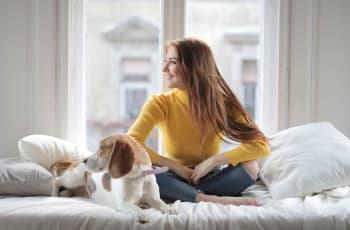 Her er 10 gode hunderacer til førstegangsejere