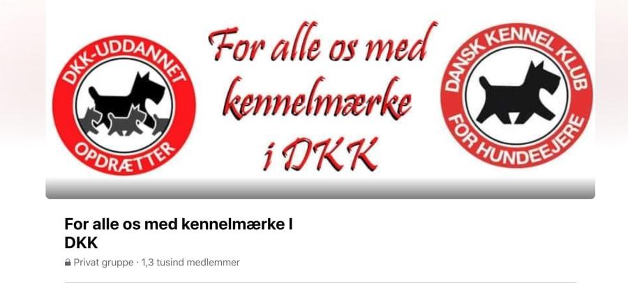 Opdatering til debat: For alle os med kennelmærke I DKK
