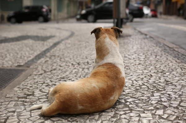Aumento de pena para maus-tratos contra cães e gatos vai para sanção de Bolsonaro