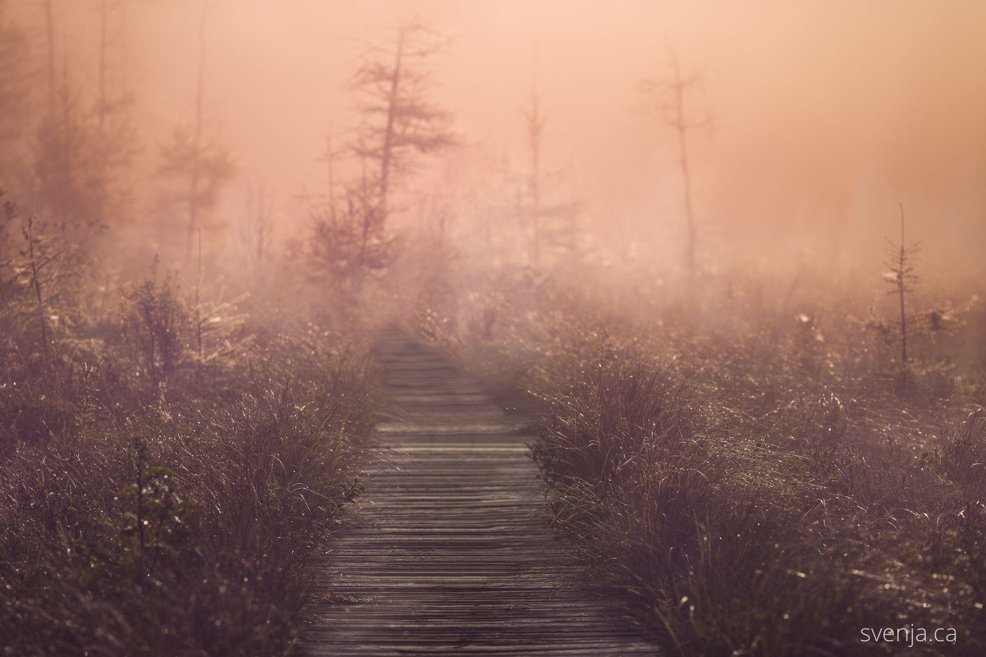 boardwalk image with pink landscape