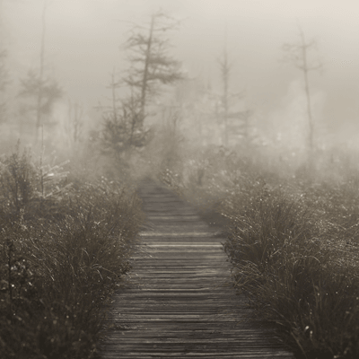 misty boardwalk thumbnail