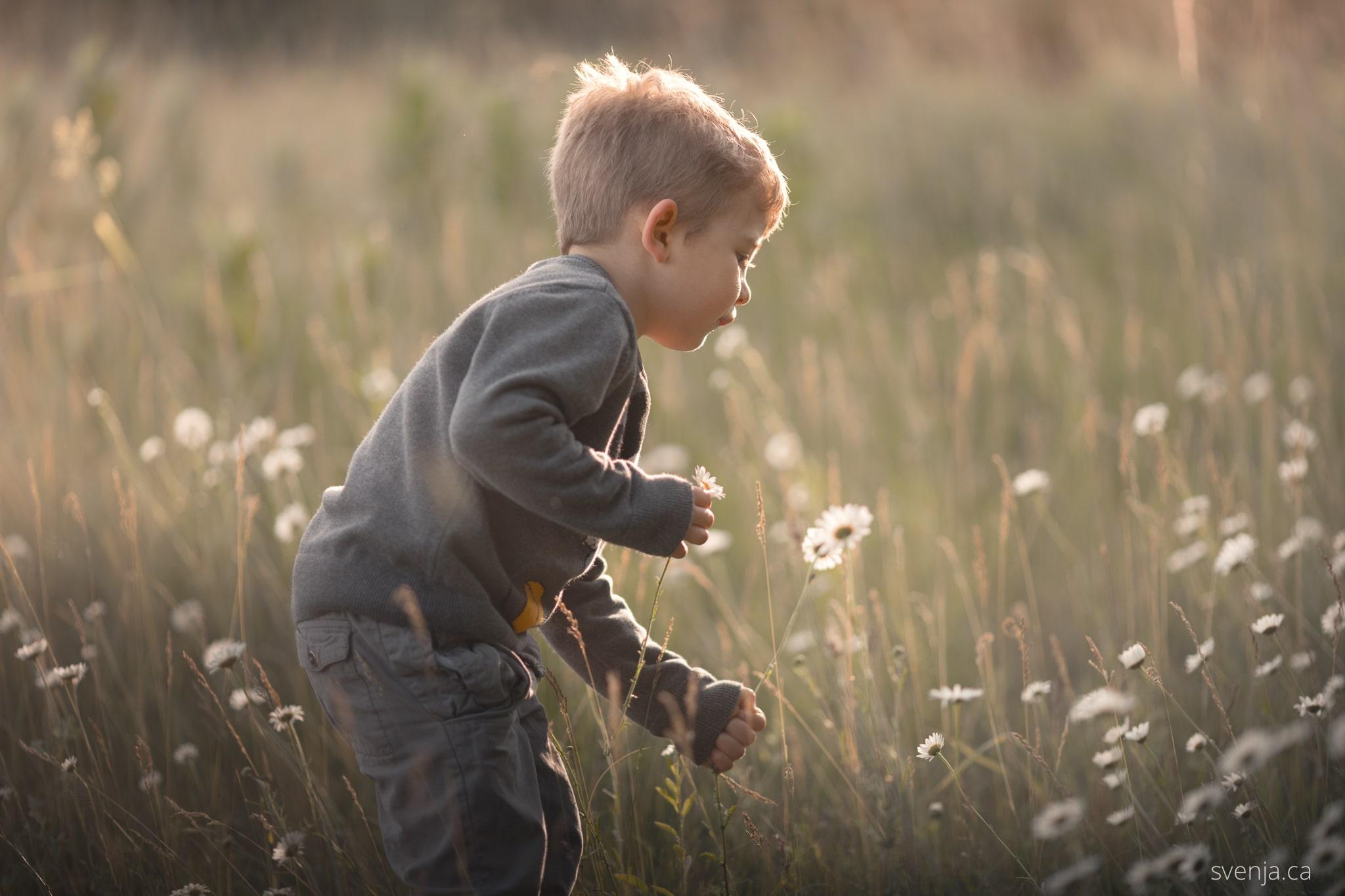 young boy picks flowers in a field.