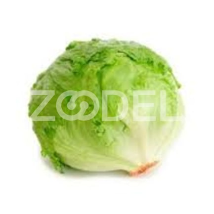 Natural Lettuce for Export