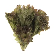 Lollo Rossa French Lettuce 0.600 kg