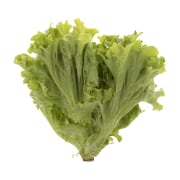Lollo Bionda French Lettuce 0.600 kg