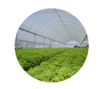Greenhouse Nylon Film (Triple Layered) UV Percent 3, 5, 10% Available I Green & White - Rokh Plastic Toos Company