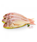 Threadfin Bream