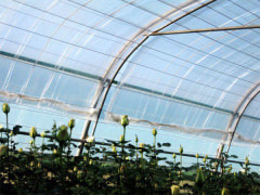 Greenhouse Second Layer Film (Triple Layered) - As The Second Layer To Reduce Energy Waste - Rokh Plastic Toos Company