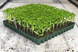 Seedling Trays - PE Material, For Planting Seeds, Multiple Uses Ability - Rokh Plastic Toos Company