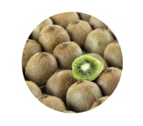 Kiwi Fruit - Organic, First Grade - Barman Energy Mehrnegar Company