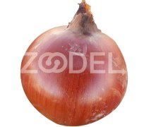 Onion Seeds - Gold Variety - 500 gr - Danab