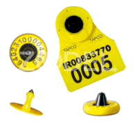Livestock Ear Tag RFID - 150*30 mm, For Livestock Identification, Electronic Marking & Information Management - Tapco Brand