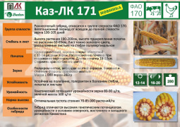 Corn seeds Kaz LK 171