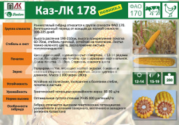 Corn seeds Kaz LK 178