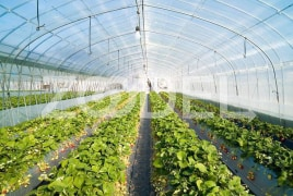 Greenhouse Cover - Resistant To Environmental & Mechanical Tensions - Persian Poushesh Polymer Company