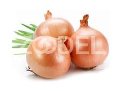 Yellow Onion for Export