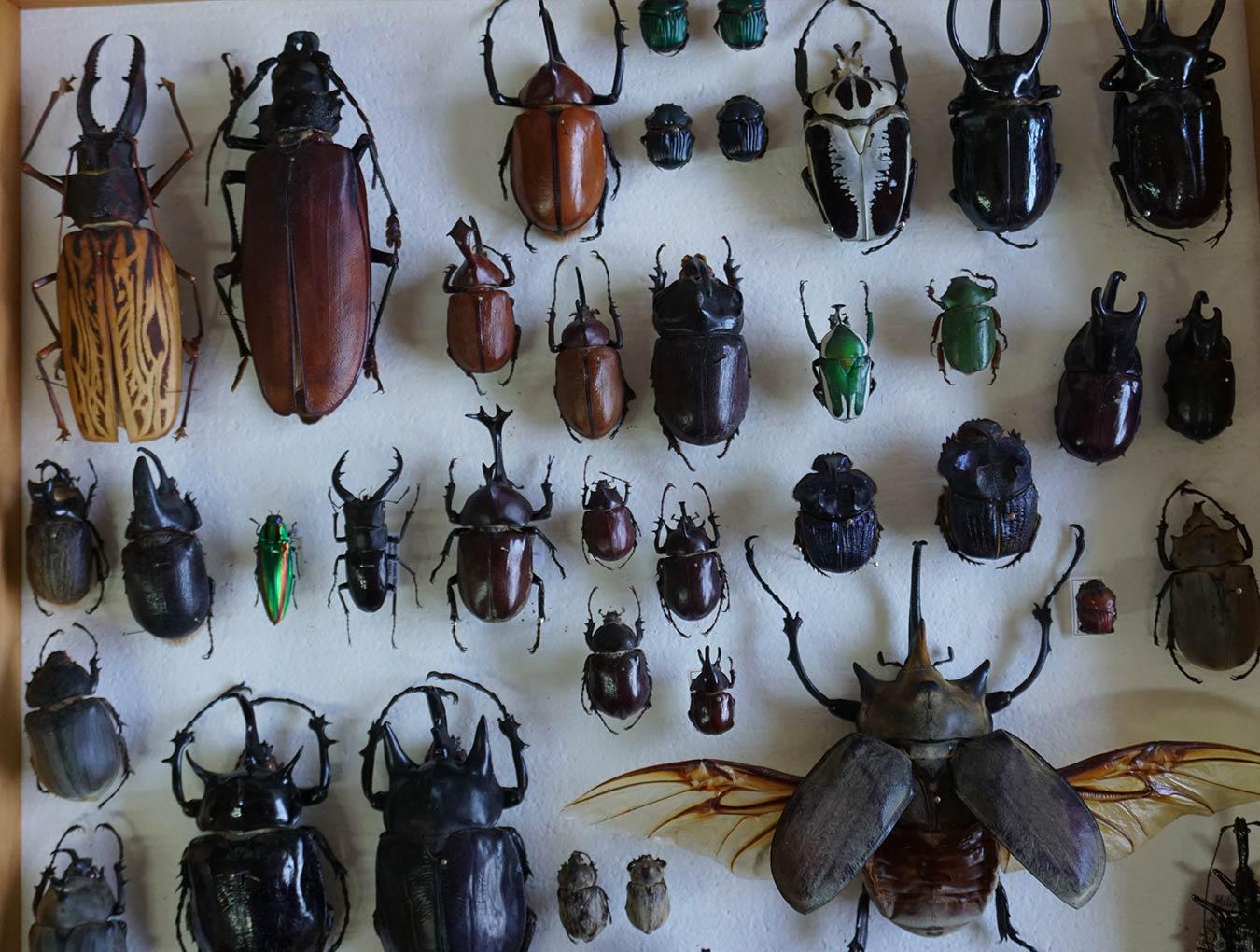 Ecología, biogeografía, diversidad, taxonomía y sistemática tropical