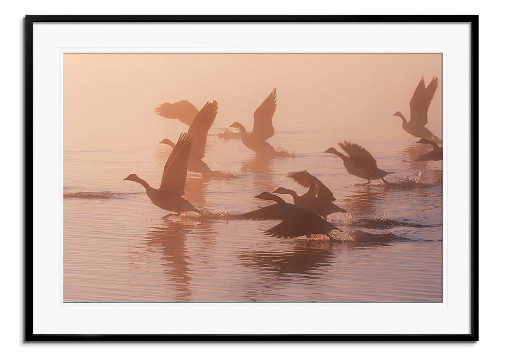 Misty Geese II by Alex Saberi