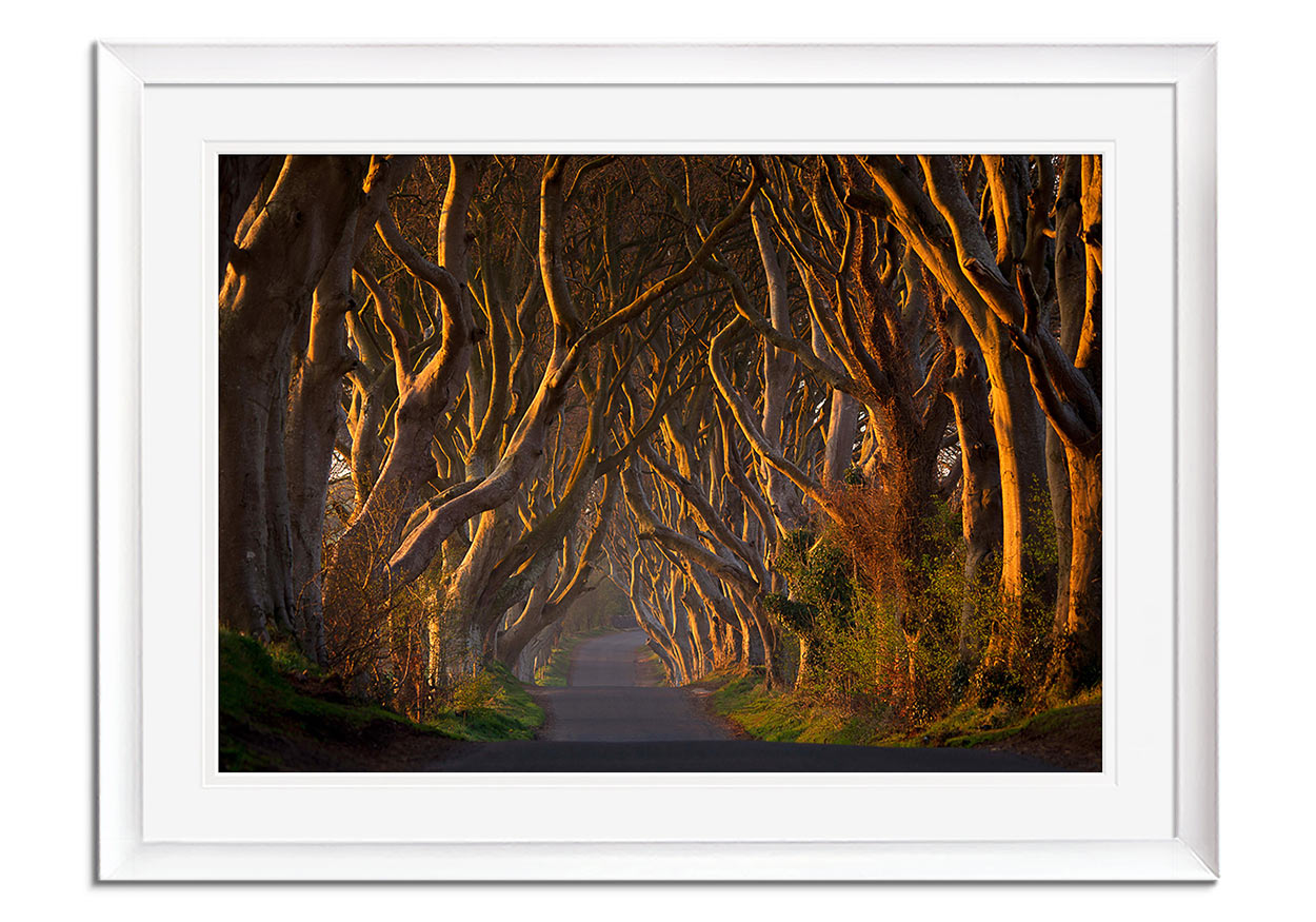 Dark Hedges in the Morning by Piotr Galus