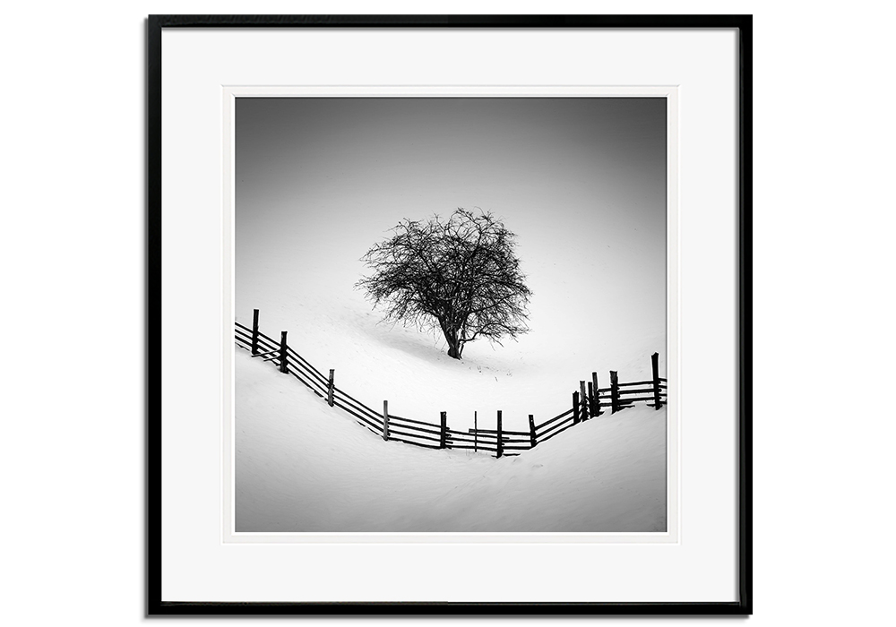 Trapped by Martin Rak