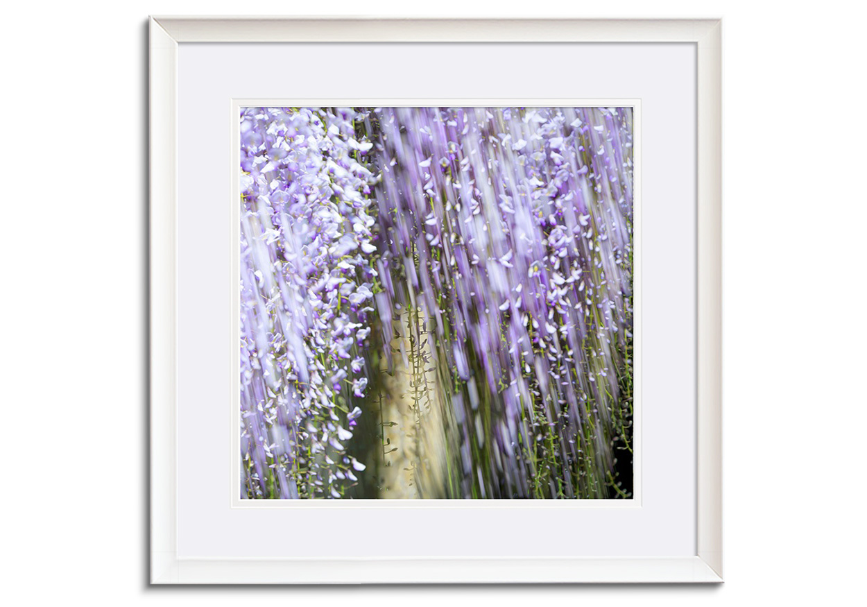 Wisteria V by Abstract
