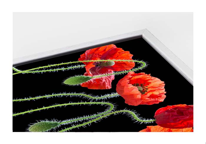 Floating framed canvas Poppies by Andy Small